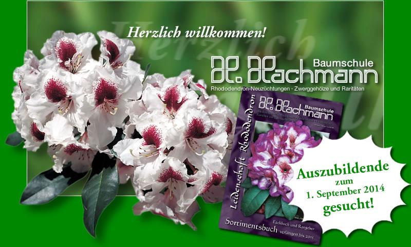 hachmann leidenschaft rhododendron. Black Bedroom Furniture Sets. Home Design Ideas