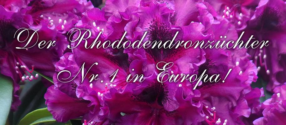 baumschule hachmann leidenschaft rhododendron barmstedt. Black Bedroom Furniture Sets. Home Design Ideas