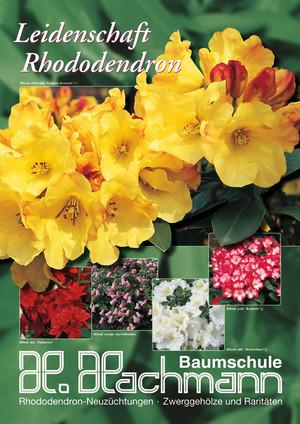 baumschule hachmann leidenschaft rhododendron barmstedt s d holstein rhododendron. Black Bedroom Furniture Sets. Home Design Ideas
